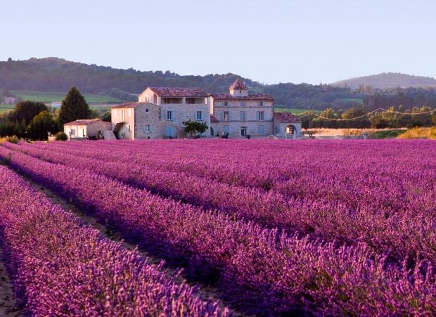 http://commons.wikimedia.org/wiki/File:Lavender_field.jpg